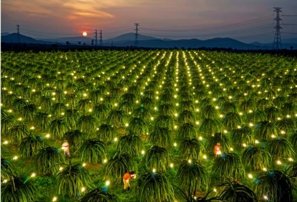 Bình Thuận: Tiết kiệm được hơn 47 triệu kW nhờ thực hiện tốt các giải pháp tiết kiệm điện