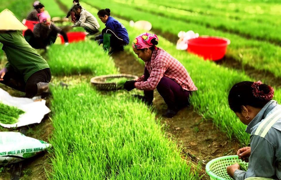 Nghệ An: Khởi sự 0 đồng, bà chủ 8X đưa sản phẩm từ mầm lúa mạch vươn ra biển lớn