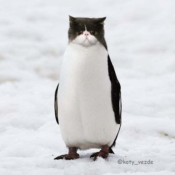 Điều gì sẽ xảy ra nếu tất cả các loài vật đều có gương mặt giống mèo?