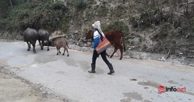 Thanh Hóa: Chủ động phòng chống rét đậm, rét hại ở vùng núi cao