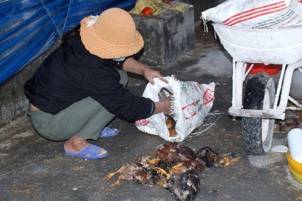 Nghệ An: Năm 2020 xảy ra 11 ổ dịch cúm gia cầm
