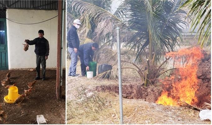 Quảng Ninh: Gần 1000 con gà nhiễm virus cúm gia cầm H5N6
