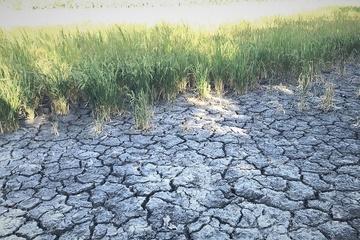 Viện Khoa học Thủy lợi miền Nam dự báo khả năng hạn mặn tiếp tục cao