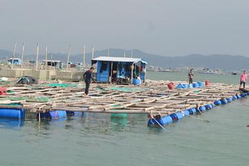 Cần có chiến lược để phát triển nghề nuôi biển bền vững