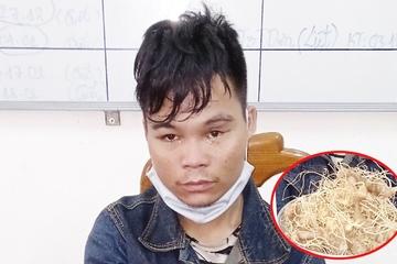 """Quảng Nam: """"Quý tử"""" trộm 10 cây sâm của cha mang bán"""