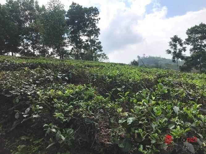 Người Hà Nội đua về các huyện vùng ven mua đất làm nhà vườn
