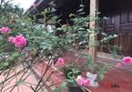 Người Hà Nội đua về các huyện mua đất vùng ven làm nhà vườn