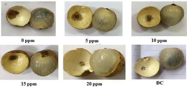 Học viện Nông nghiệp Việt Nam: nơi ươm mầm những kết quả ứng dụng công nghệ nano trong trồng trọt