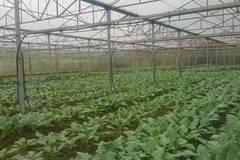 Thạch Thành (Thanh Hóa): Nông dân đổi đời nhờ phát triển nông nghiệp công nghệ cao