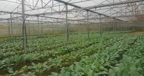 Khoa học công nghệ nâng tầm nông sản Sơn La