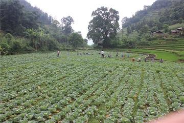 Mường Khương khởi sắc nhờ ứng dụng khoa học công nghệ trong nông nghiệp