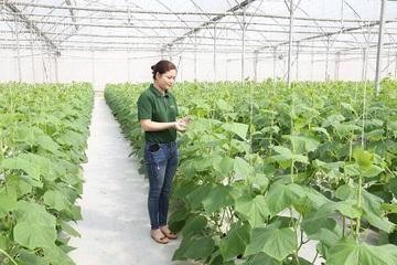 Ứng dụng công nghệ cao: Cú hích phát triển nông nghiệp Bắc Giang