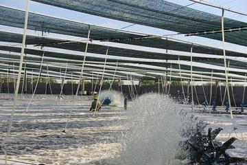 Trà Vinh: Thoát nghèo nhờ ứng dụng khoa học kỹ thuật vào chăn nuôi