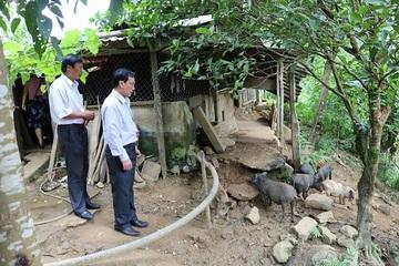 Quảng Nam: Đưa khoa học kỹ thuật vào trồng trọt, chăn nuôi để giảm nghèo