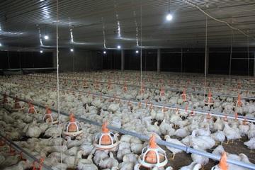 Ứng dụng khoa học kỹ thuật trong chăn nuôi giúp dân thoát nghèo