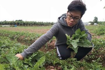Sinh viên Đại học Bách khoa Hà Nội sáng chế thành công nước tưới hữu cơ