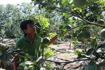 Ứng dụng KHKT vào sản xuất nông nghiệp: Bước đột phá để giảm nghèo