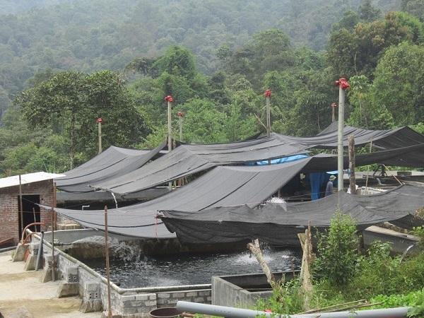 Ứng dụng kỹ thuật nuôi cá nước lạnh để thoát nghèo