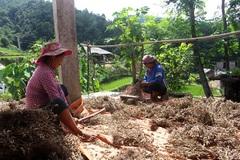 Cải thiện đời sống vùng cao bằng các mô hình trồng trọt, chăn nuôi