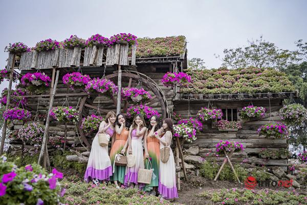 Vườn hoa ngọc thảo nở rộ ngay chân cầu Long Biên, giới trẻ thích thú 'check-in'