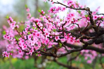 15 loại cây cảnh mang ý nghĩa rước tài lộc, phú quý vào nhà