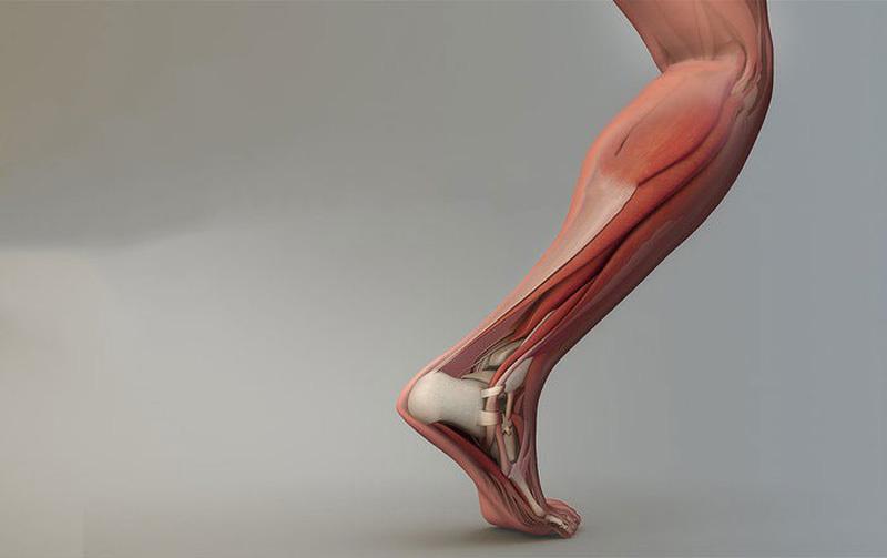 Nghiên cứu nuôi cấy vật liệu phục vụ kỹ thuật ghép gân