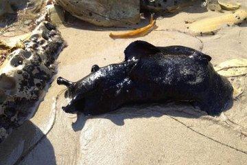 Phát hiện sinh vật khổng lồ nằm chình ình trên biển ai nhìn cũng khiếp sợ