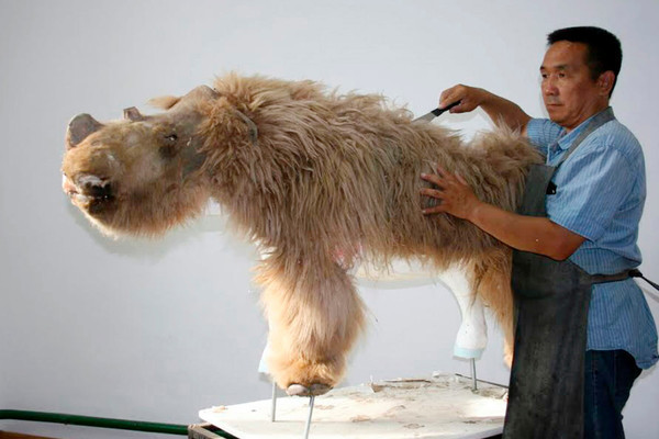 Băng tan lộ xác tê giác lông cừu nguyên vẹn đáng kinh ngạc