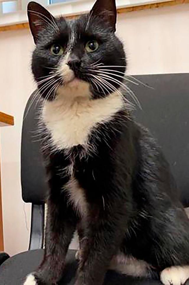 Mèo may mắn được cứu từ bãi rác trở thành 'Thứ trưởng'