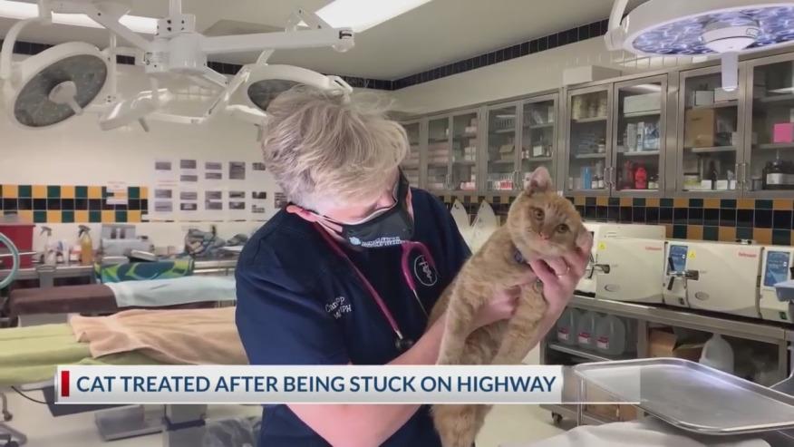 Nghẹt thở xem pha giải cứu mèo mắc kẹt trên đường cao tốc Mỹ