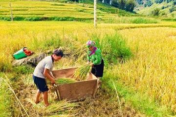 """Bảo hộ Chỉ dẫn địa lý """"Mường Khương – Bát Xát"""" cho sản phẩm gạo Séng Cù"""