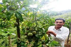 Chuyển giao KHKT ứng dụng công nghệ trồng cây chanh leo giúp xóa đói giảm nghèo