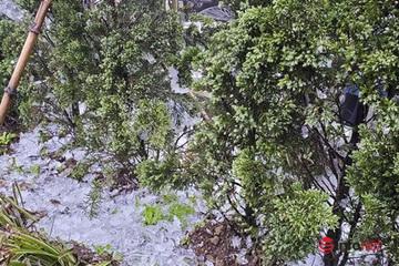Không khí lạnh tăng cường, Bắc Bộ rét hại kéo dài, Trung Bộ mưa rét