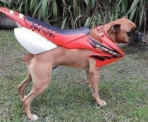 chống rét cho thú cưng