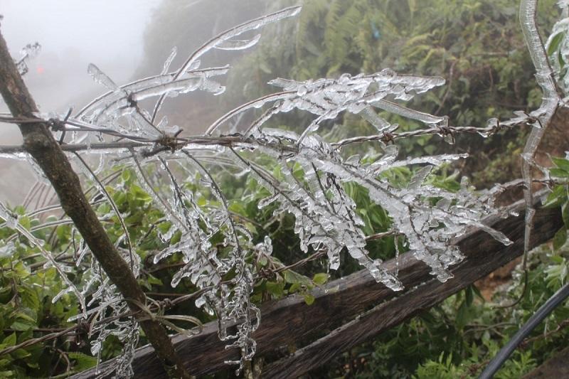 vùng cao,Tà Xùa,Bắc Yên,chống chọi,băng giá,sương muối,Sơn La,rét hại