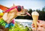Độc đáo với chiếc kem đặc biệt dành riêng cho thú cưng
