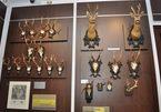 Rùng rợn khung cảnh bên trong bảo tàng 'thợ săn' ở Romania