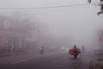 80 con trâu, bò trong một xã bị chết do rét đậm ở Quảng Trị