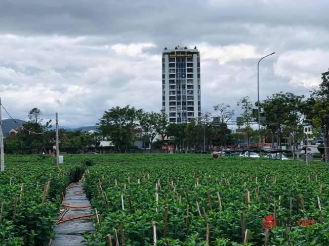 Tết,Đà Nẵng,Hoa Tết,Tết Tân Sửu 2021