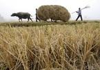 Vì sao Trung Quốc cấm tổ chức đám cưới và đám ma ở nông thôn?