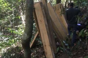 Bắt 3 đối tượng khai thác gỗ trái pháp luật ở Lâm Đồng