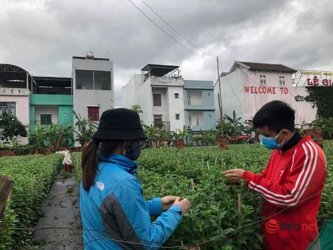 Cuối năm, sinh viên đi ngắt nụ hoa kiếm vài triệu tiêu Tết