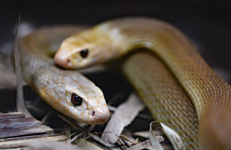 Sự thật đằng sau chuyện người đàn ông dành 72 giờ với 72 con rắn độc