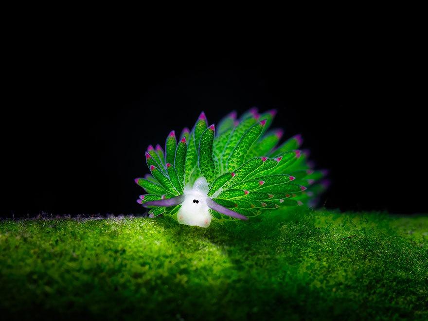 Sự thật về loài động vật hiếm hoi có khả năng quang hợp