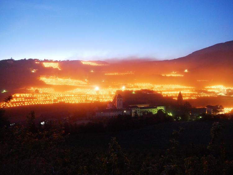 Sự thật sau bức ảnh cánh đồng nho Italia sáng rực gây bão mạng
