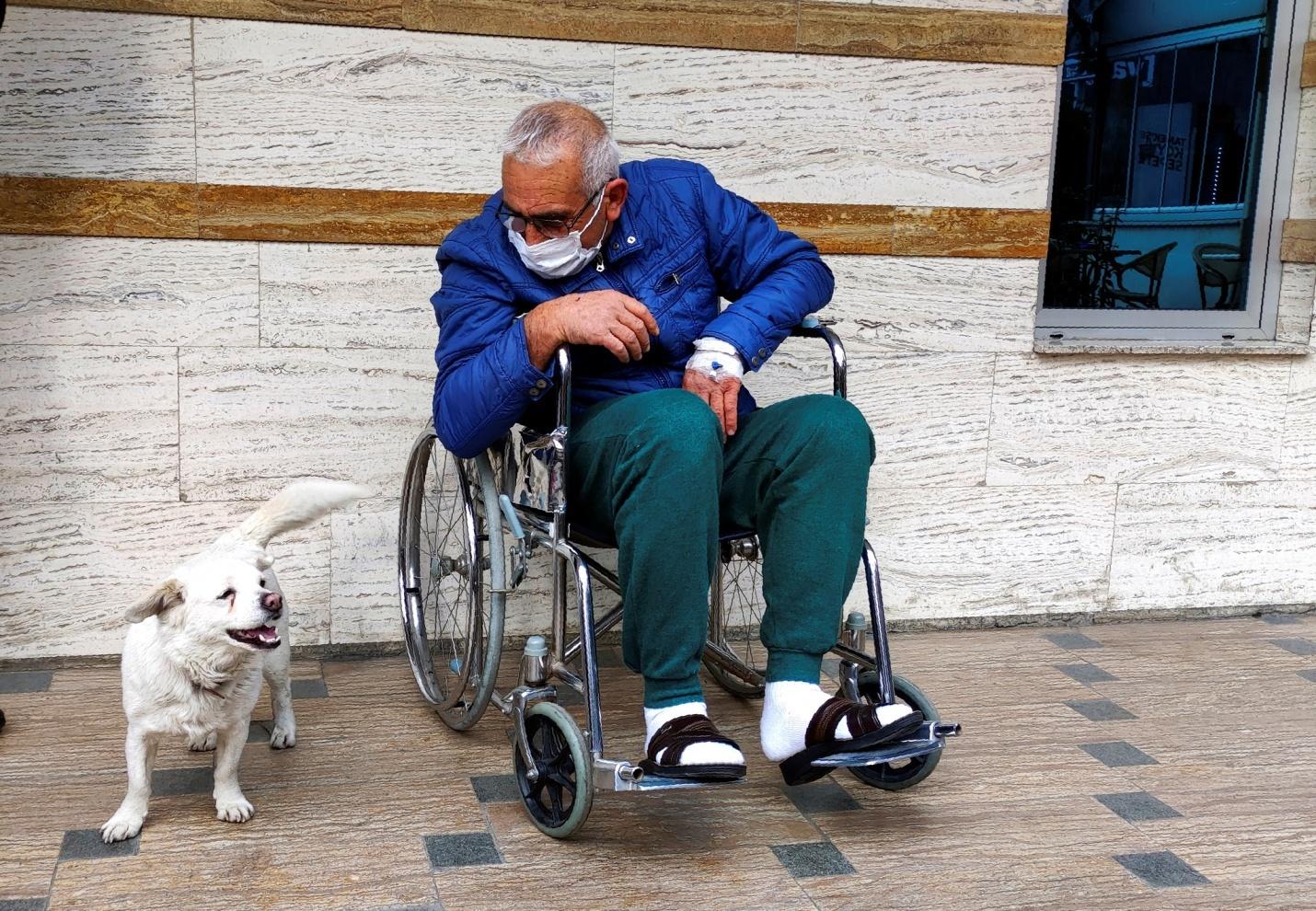 Chó trung thành chờ đợi chủ nhân suốt 6 ngày ở cửa bệnh viện