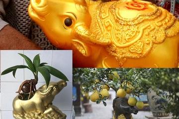 """Trâu vàng """"cõng"""" cây dừa, bưởi, thay heo đất giữ tiền độc đáo Tết này"""