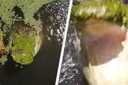 Khoảnh khắc kinh hoàng cá sấu tìm cách giật rơi máy bay không người lái