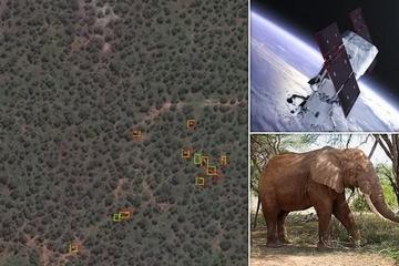 Đếm voi từ không gian, khó tin nhưng có thật