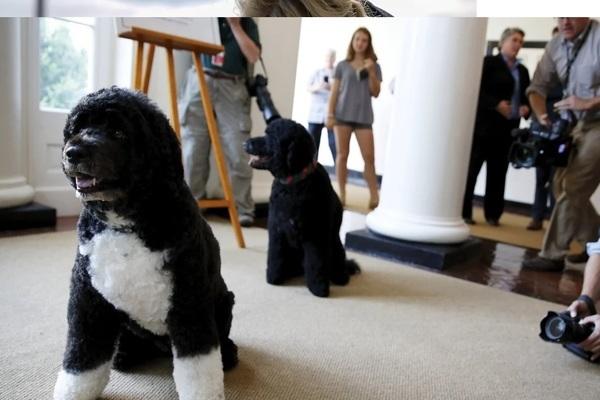 Hai chú chó cưng của TT Biden tới sống ở Nhà Trắng